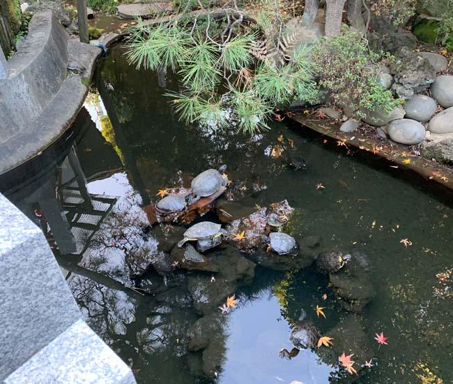 成田山川越別院 亀の池