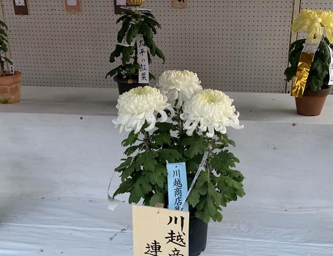 小江戸川越菊まつり