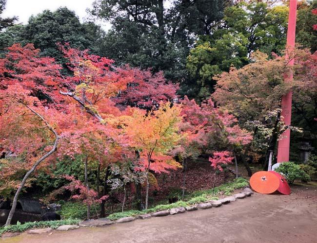 喜多院の紅葉