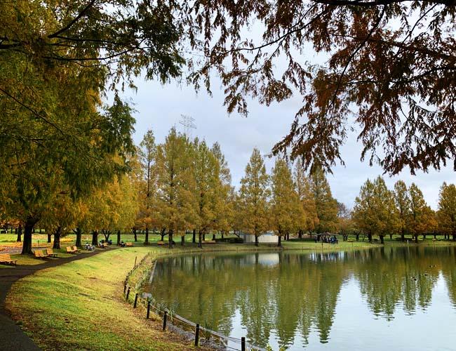 水上公園の紅葉