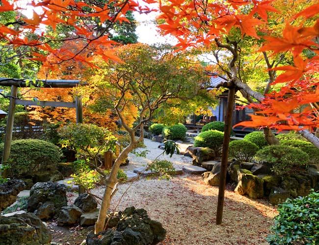 丹徳庭園の紅葉