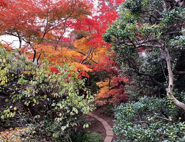 料亭 山屋の紅葉