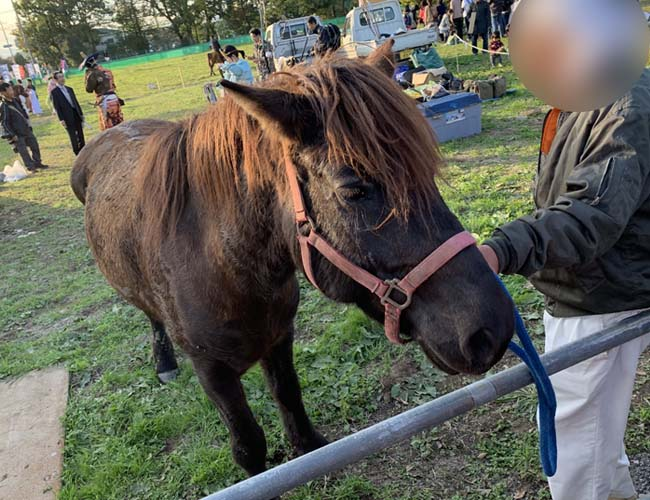体験乗馬の馬
