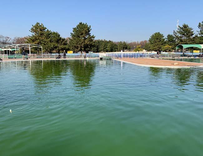 川越水上公園 多目的プール