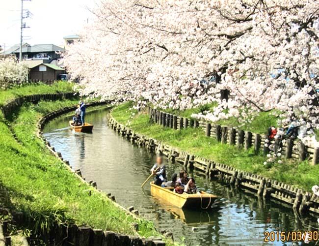 小江戸川越春の舟遊