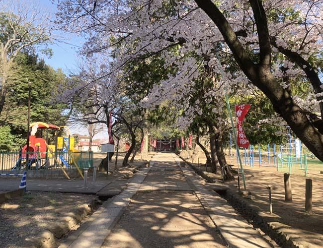 三芳野神社の桜