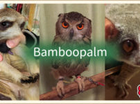 Bamboo Palm本店