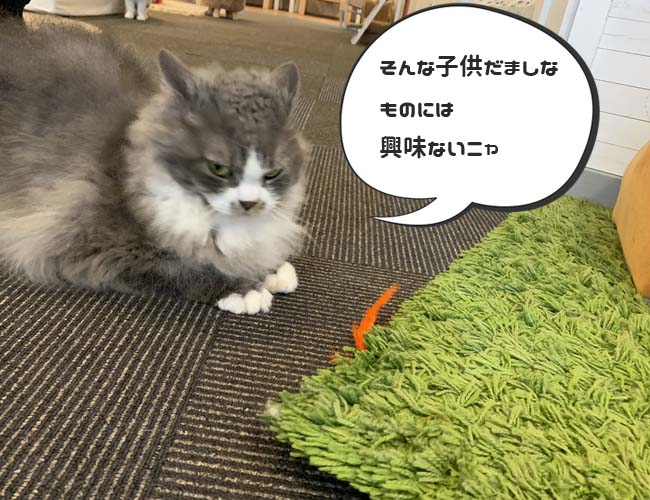 猫カフェ 猫家 川越店