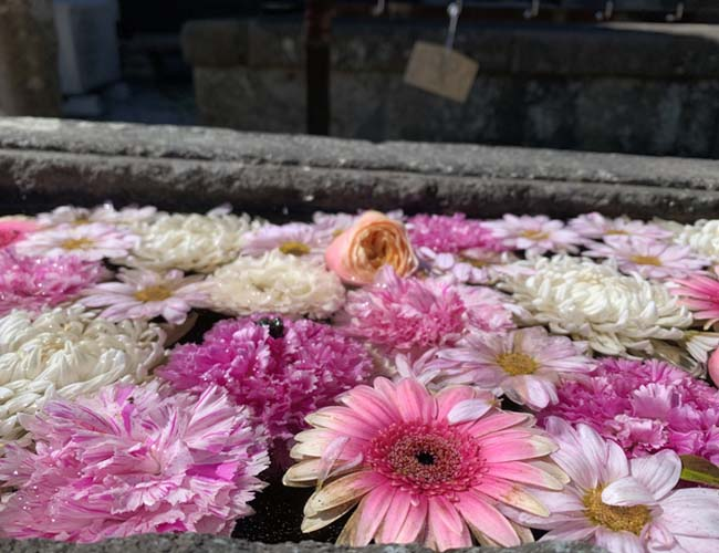 妙昌寺の花手水